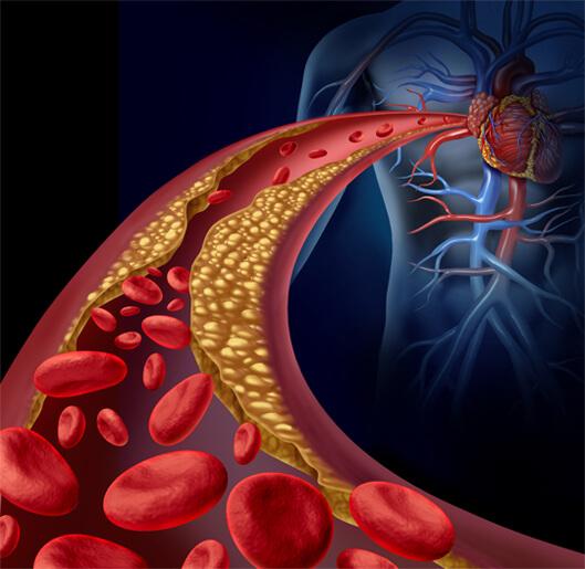 hart en bloedvaten