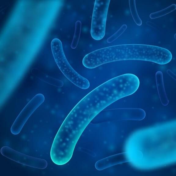 Lactobacillus acidophilus DDS-1 probiotica