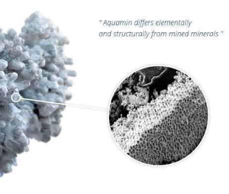 Calcium Carbonaat (bioactief) Calcium Bisglycinaat