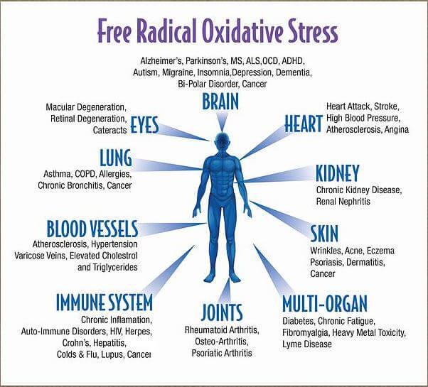 oxidatieve stress-vrije radicalen-antioxidanten